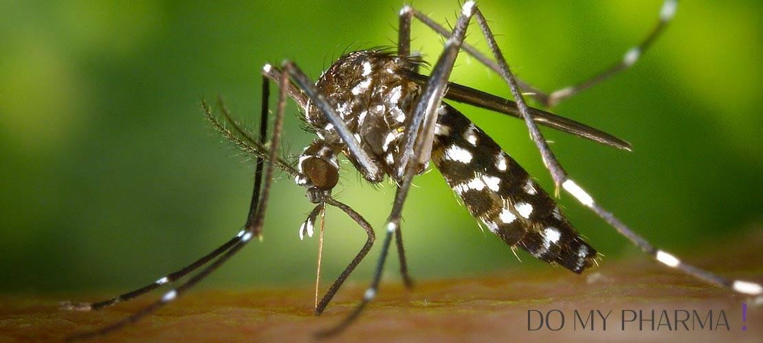 Profitez des soirées d'été sans moustique !